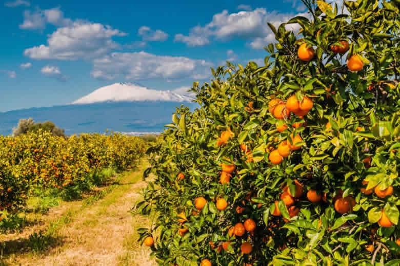 5 curieuze culinaire ontdekkingen bij een bezoek aan de Etna