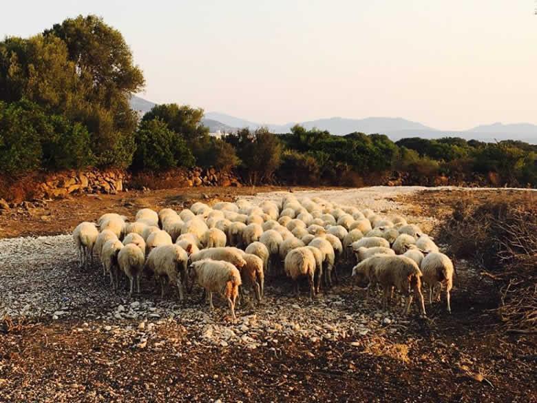 8 dagen wandel-arrangement Sardinië