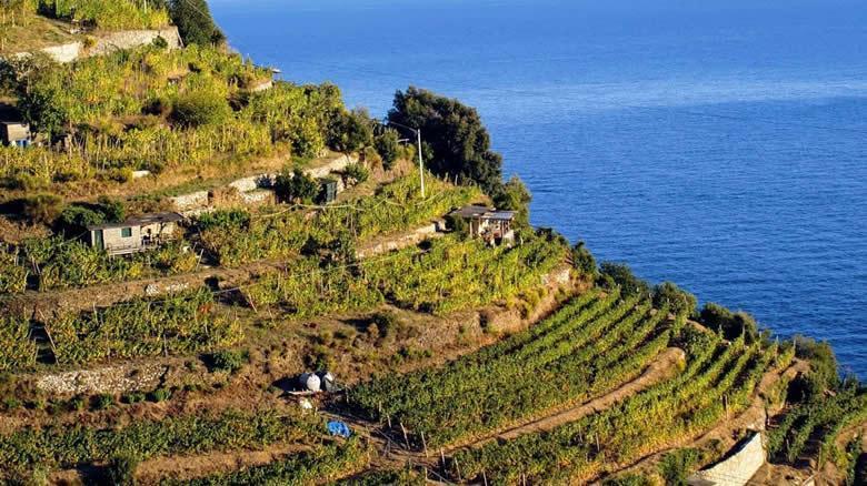 Op reis langs de wijngaarden van Cinque Terre