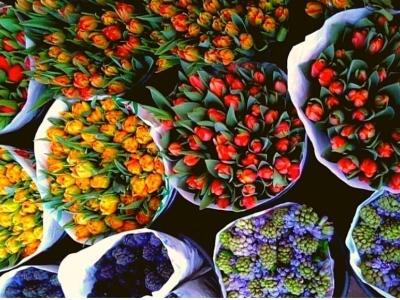 Monterotondo, tulpen in de Tiber