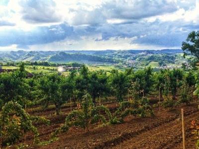 Alessandria en de wijngebieden in Piemonte met Stef Smulders