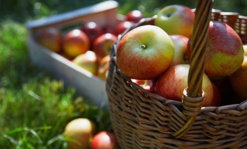 Konijn met appels en honing