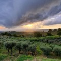 Countryhouse B & B Vista sull´Oliveto, ´adults only´