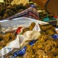Oktober - Witte Truffelbeurs van Acqualagna in Marche