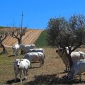 Gratis je huis verbouwen in Italie! Goed voor de werkgelegenheid