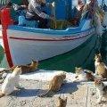 Taranto |  Dolfijnen en een zee vol vis