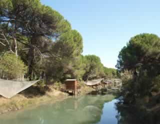 Pijnboombossen langs de kust bij Cervia