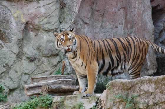 De dierentuin van Rome