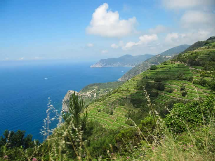 Wijngaarden en terrassen in Cinque Terre