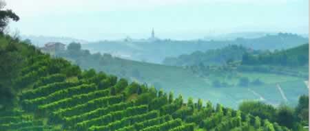 wijngaard_piemonte