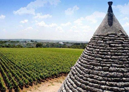 Primitivo wijngaarden in Puglia