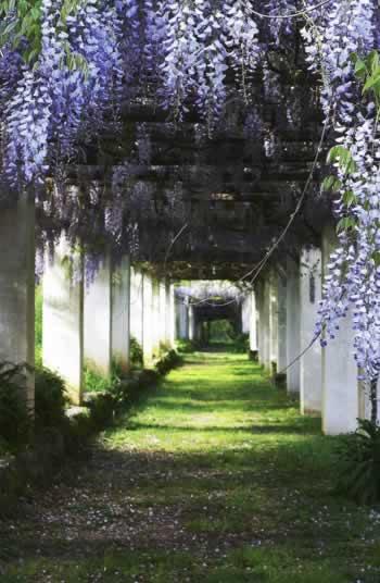 De tuinen van Villa Piccola