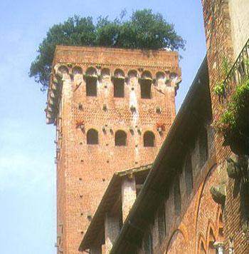 Torre dei Guinigi - Lucca