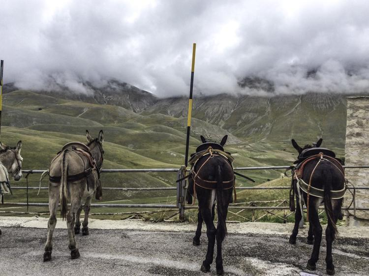 De ezeltjes wachten op ons