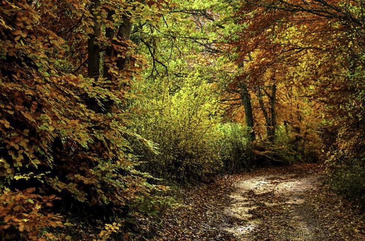 De bossen van Umbrie in herfsttooi