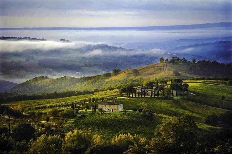 De wijngaarden voor de Sagrantino
