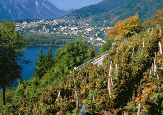 Chardonnay uit Trentino Alto-Adige in 2010