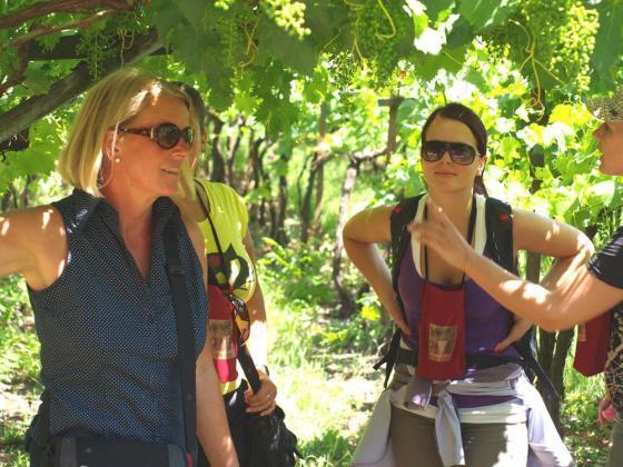Wijn uit Trentino, de Weinstrasze ontdekken vanuit Bolzano