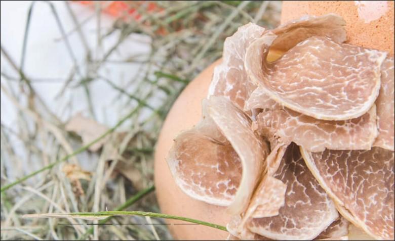 Piemonte. land van de truffel