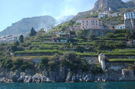 Citroen plantages in Amalfi