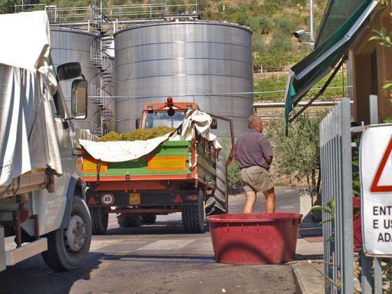 Italiaanse wijnoogst 2012
