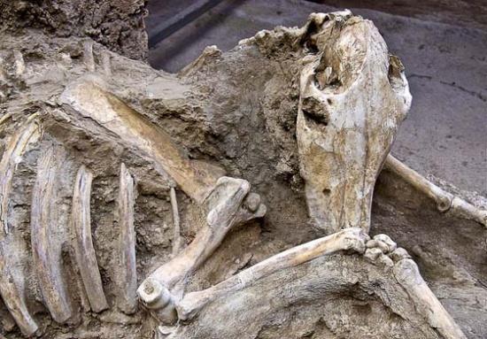 Een gemummificeerd paard in Pompeii
