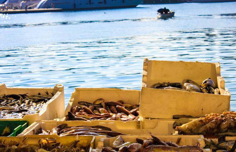 De vismarkt van Trani