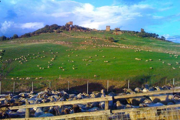 Bibi´s blog: Biologische schapenkaas uit het heiligdom Macereto