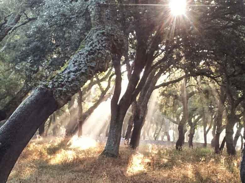 Hart en ziel in mythisch Sardinië