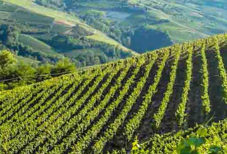 La Bruciata | De Dolcetta d´Alba wijnen van Oscar Bosio