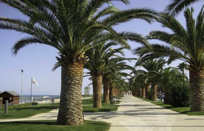 De palmen riviera