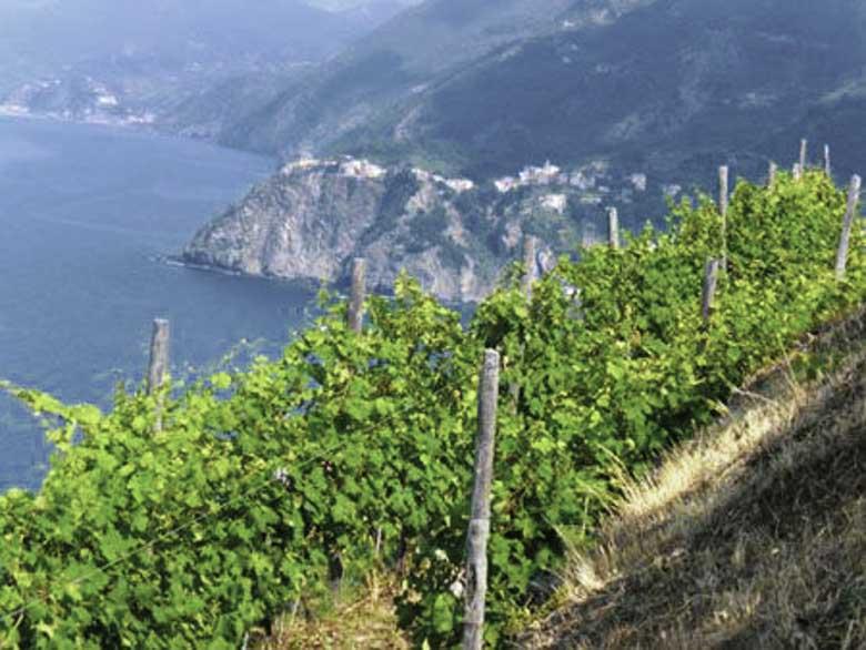 Wijntoerisme in Italie