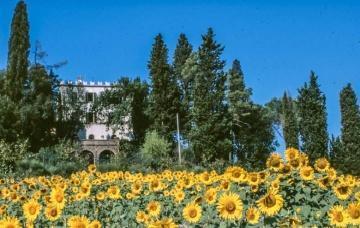 Villa La Collina, kasteeltje met bijgebouwen en wijngaard