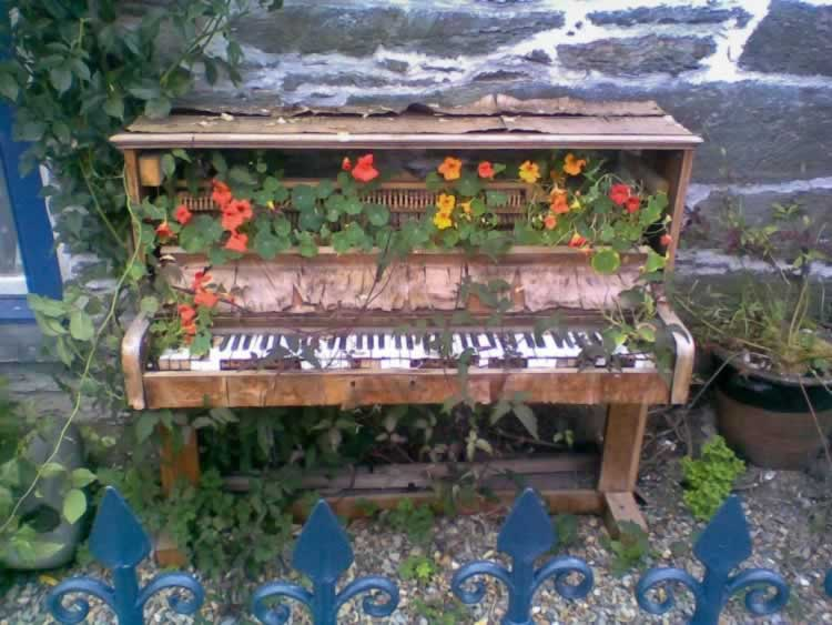 Niet iedereen zal een oude piano in tuin hebben staan om op deze manier Oost-Indische kers te kweken