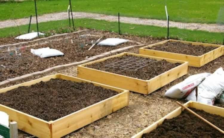 Groenten in een bekisting in de tuin