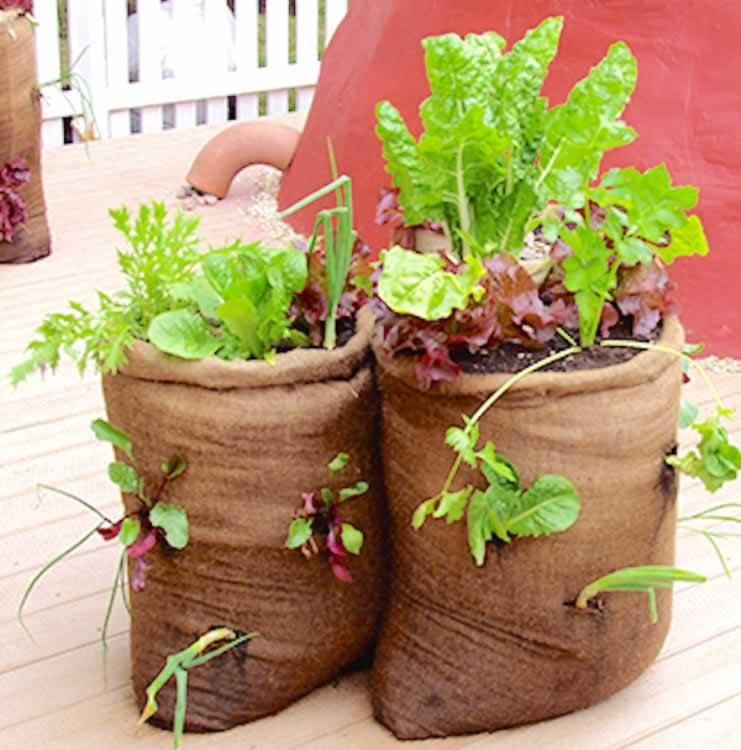 groenten in een juten zak