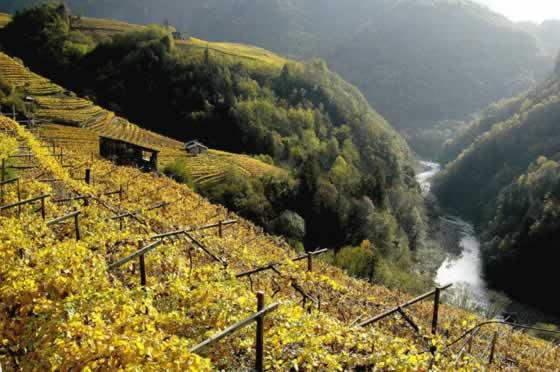 wijngaarden-trentino